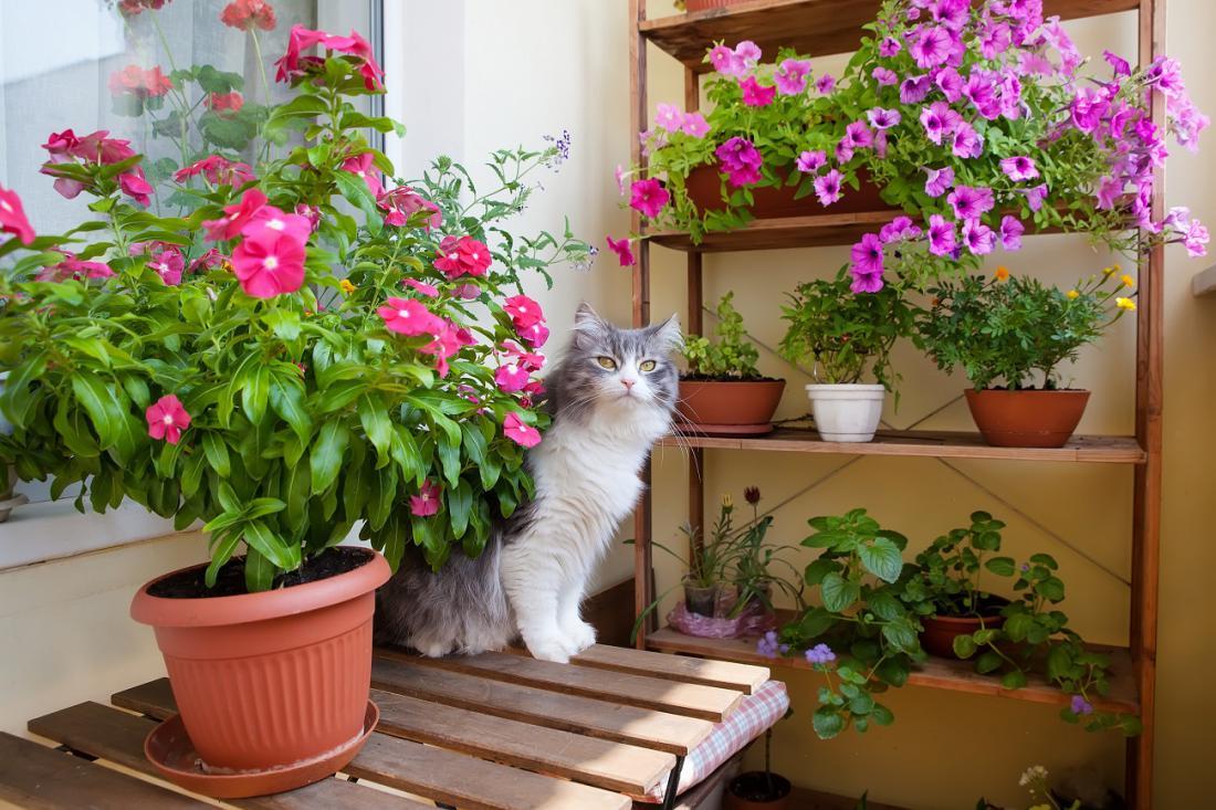 Večina balkonskih cvetic je toploljubnih, zato naj gredo na prosto šele sredi meseca. Foto: Elena Efimova/Shutterstock