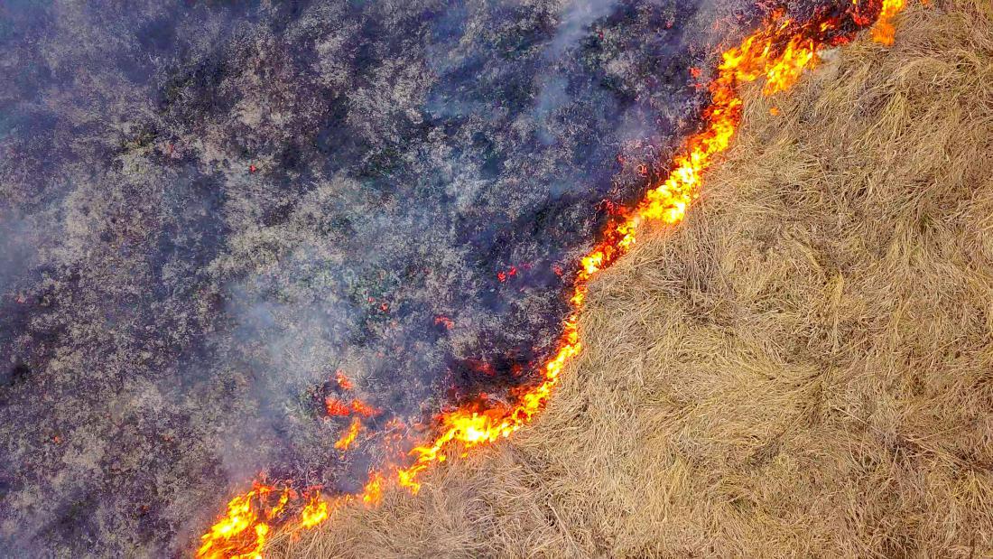 Ogenj uniči avtohtone rastline, ne pa tudi invazivnih. Foto: LaineN/Shutterstock