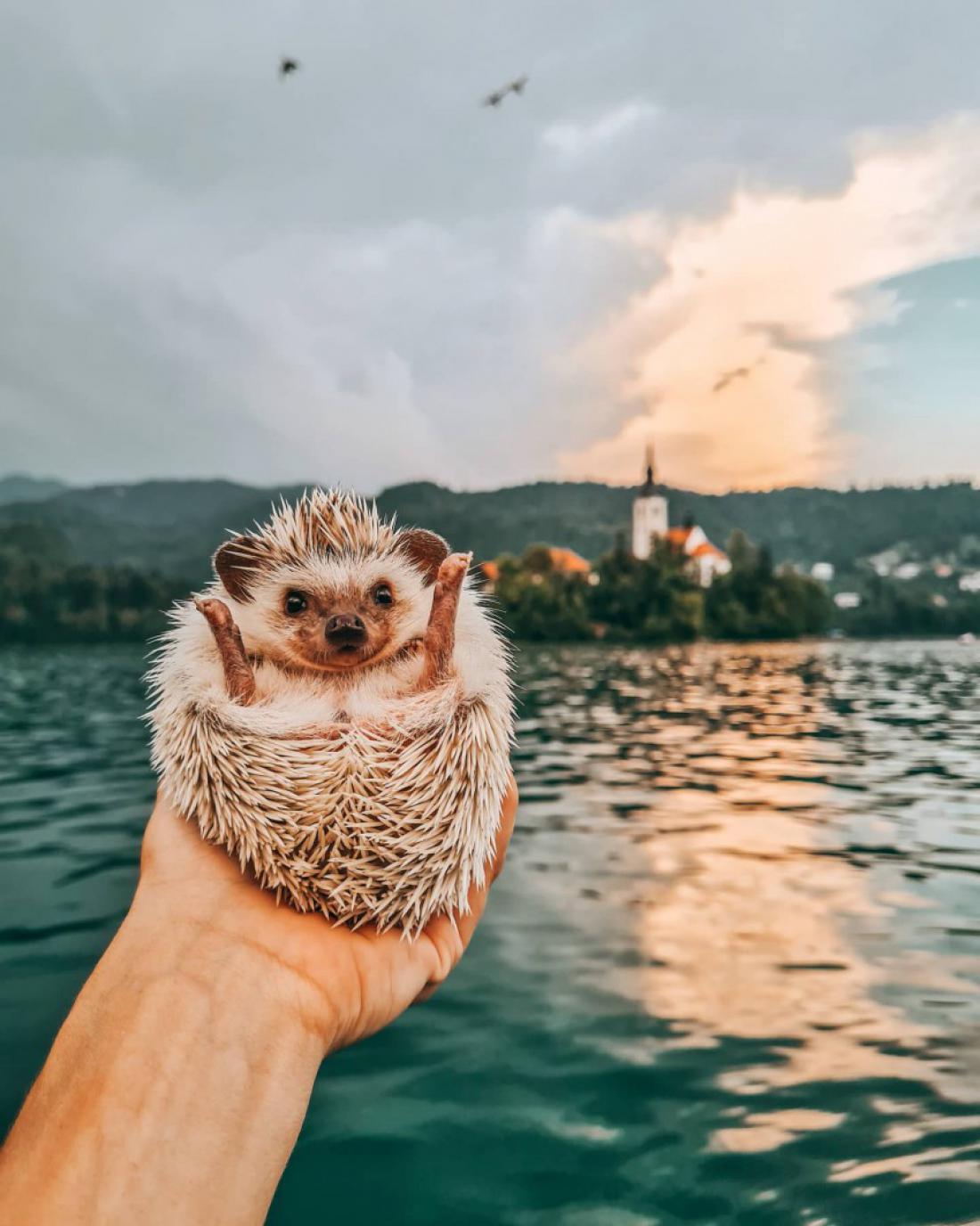 Najprisrčnejši ljubljenčki leta 2020 so tako postali ježek Heda ter psička Atash in Aruba. FOTO: Nuša Klinar