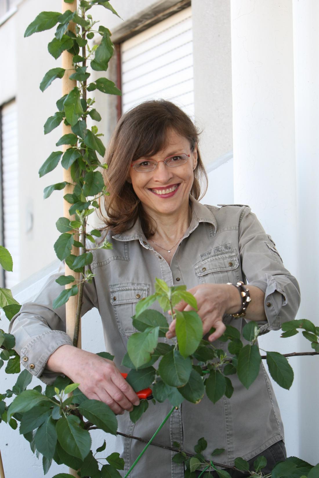 Dveletna jablana na balkonu. Foto: Igor Modic
