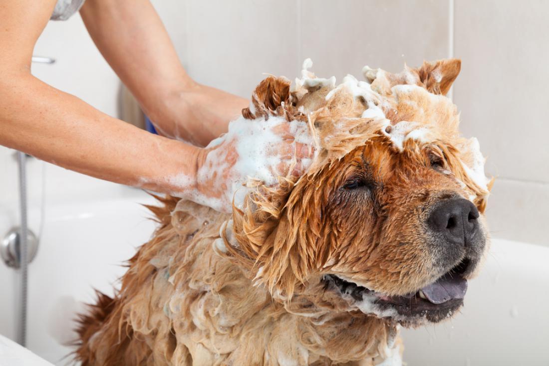 S kopanjem psa ne pretiravajte. FOTO:135pixels/Shutterstock