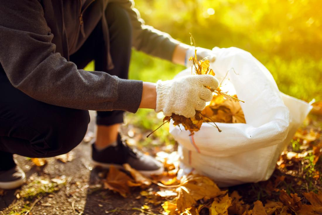 Listje sodi v rjave zabojnike za biološke odpadke ali v tipizirane vrečke, ki jih na dan odvoza bioloških odpadkov postavite poleg rjavega zabojnika. FOTO: maxbelchenko/Shutterstock
