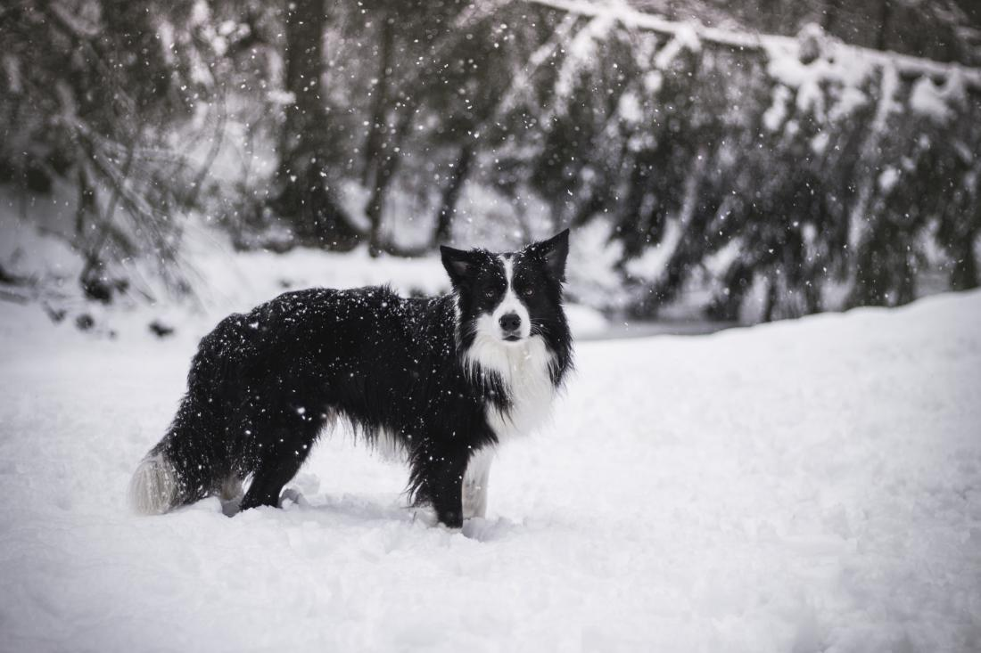 Lun in snežno veselje (Gordana Zalaznik).