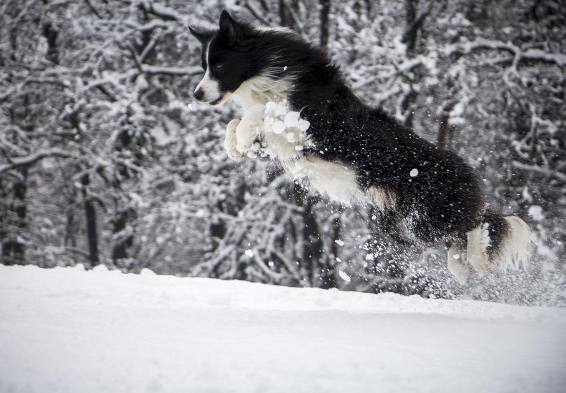 Lun in njegovo snežno veselje. FOTO: Gordana Zalaznik