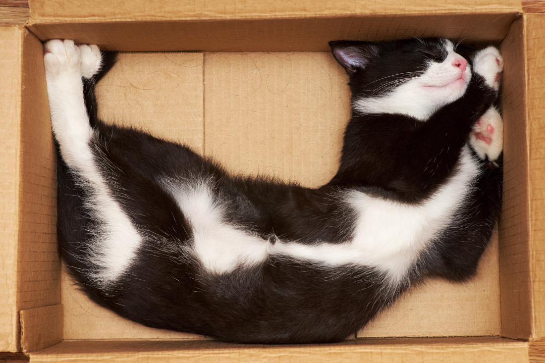Mačke v škatlah občutijo varnost in doživijo naval endorfinov.