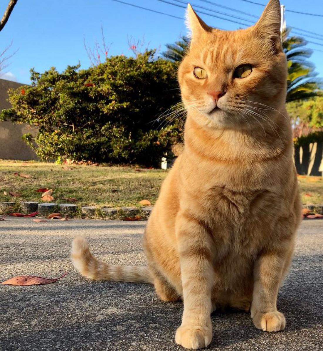 Oranžna mačka Gosaku (Foto: 尾道市立美術館/Twitter)