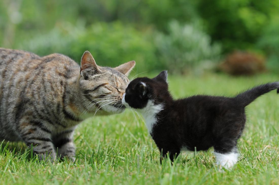 Dovolite, da se počasi navadita ena na drugo. FOTO: schubbel/Shutterstock