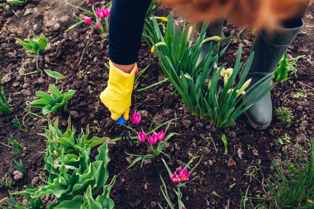 Vse cvetice pridejo lepše do izraza, če zemljo okoli njih razrahljamo. Foto: Mariia Boiko/Shutterstock