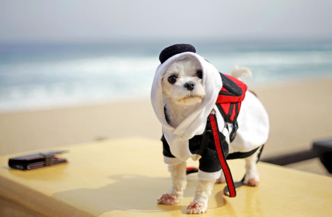 Manjši psi so bolj občutljivi in hitreje izgubljajo toploto. FOTO: Matej Družnik/Delo