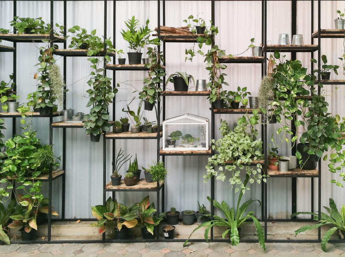 Spletna prodaja sobnih rastlin je zanimiva tudi zaradi možnosti dogovora o dostavi redkih rastlin. FOTO: Piyanut Sirikate/Shutterstock