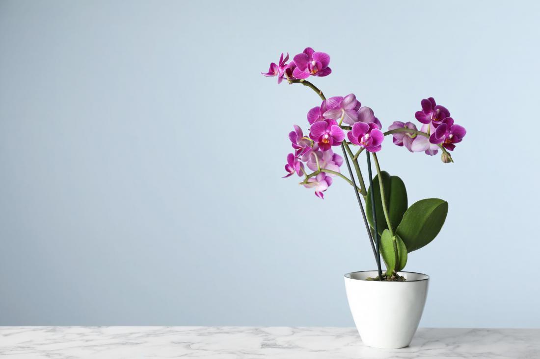 Orhideja je odlična izbira, saj pozimi cveti. Foto: New Africa/Shutterstock