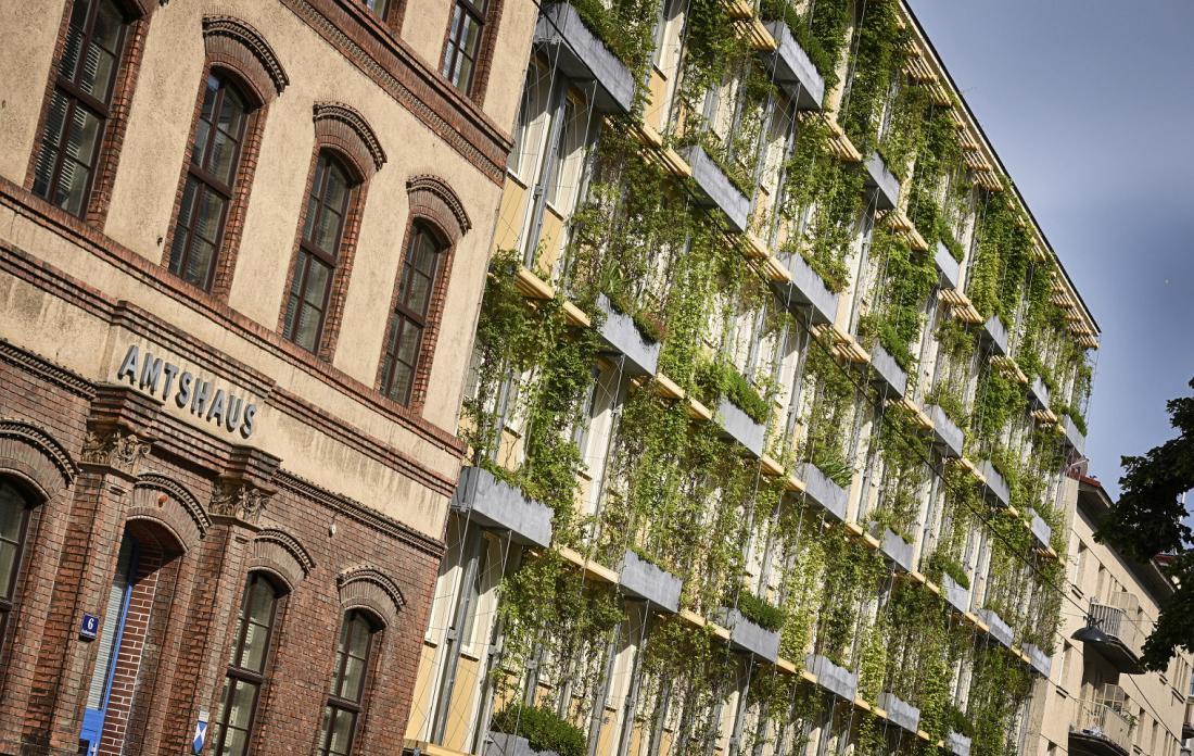 Ozelenitev fasad. FOTO: Wiener Wasser/Zinner