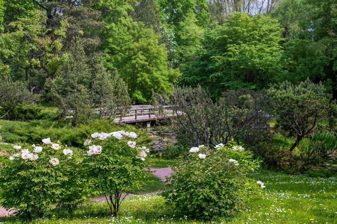 Lesnate potonike v japonskem vrtu