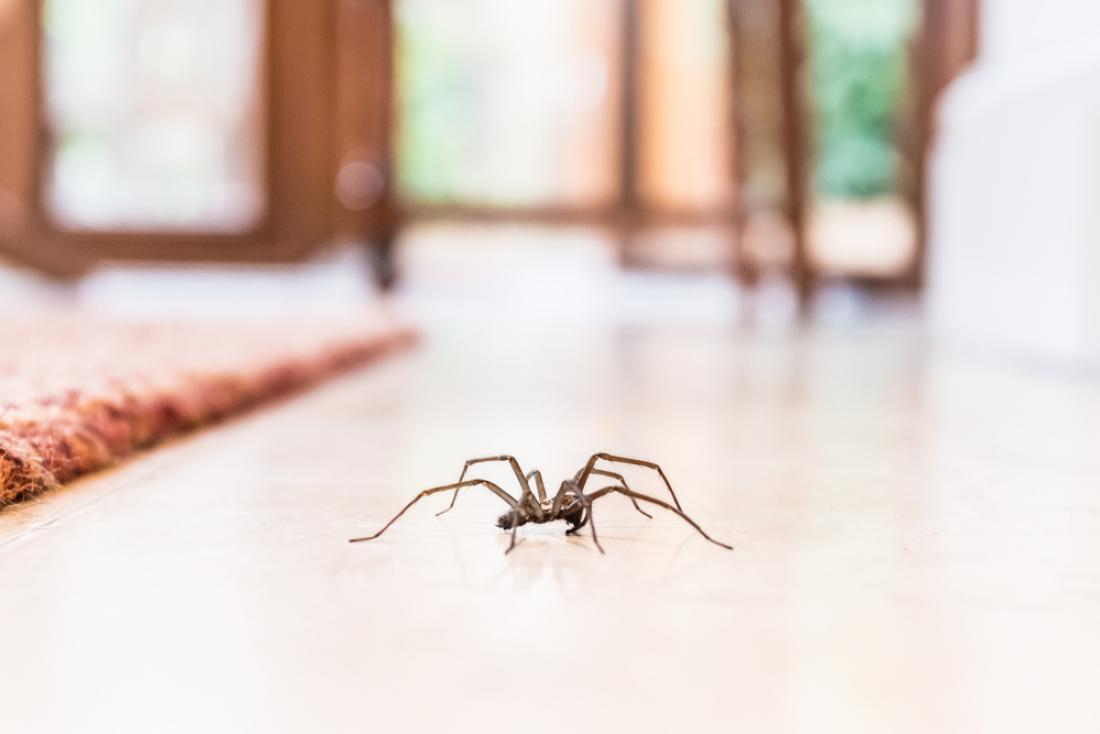 Če vam pajki povzročajo kurjo polt, ni potrebe, da jih ubijete, temveč se jih lahko znebite na human način. FOTO: Christine Bird/Shutterstock