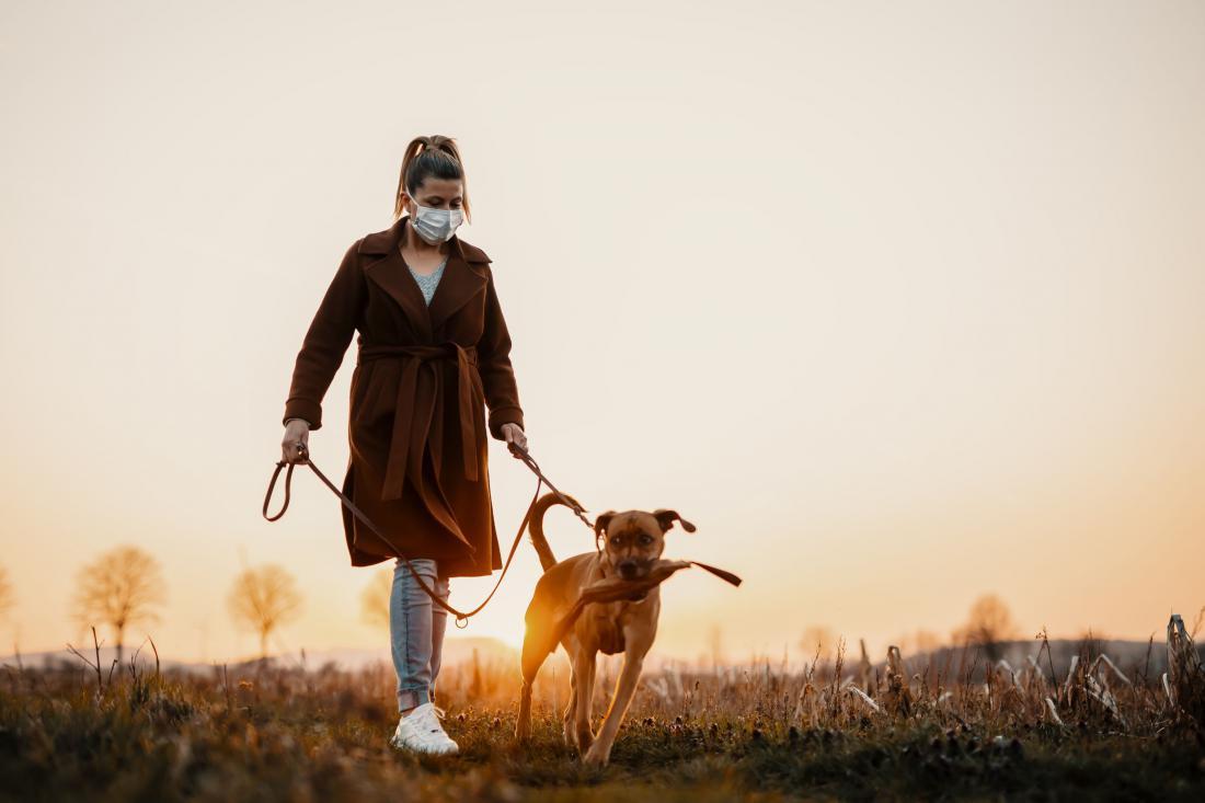 Psa na samoto navadimo postopoma. Foto: Shutterstock