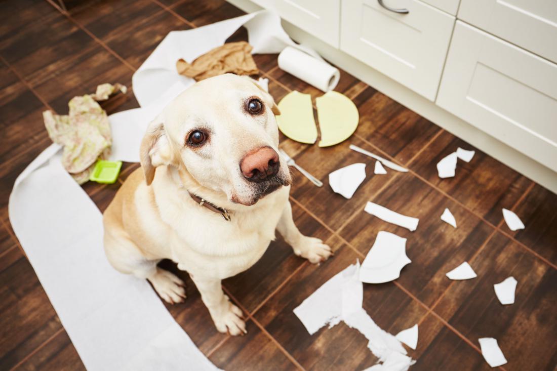 Stres bodo izrazili z uničevanjem stvari. Foto: Shutterstock