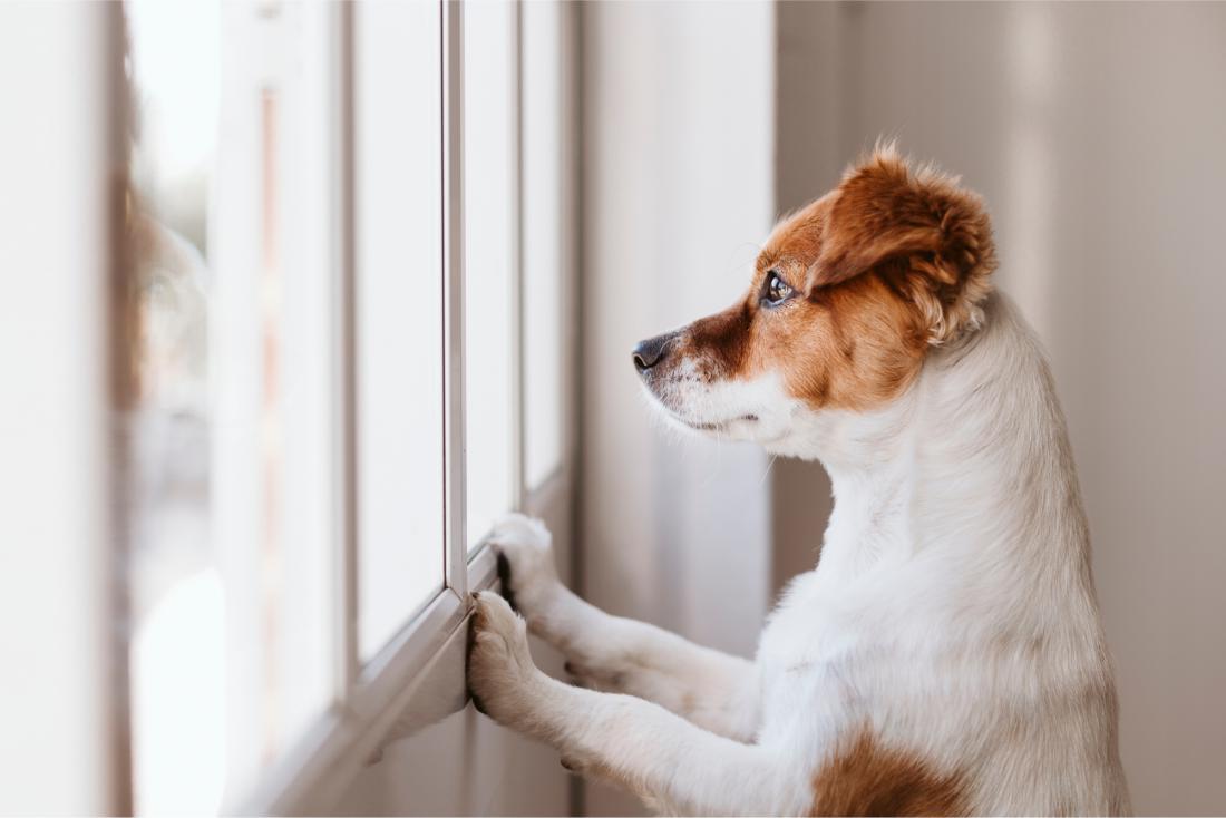 Raziskave kažejo, da ima kar osem od desetih psov težave, ko jih pustite same doma. FOTO: Shutterstock