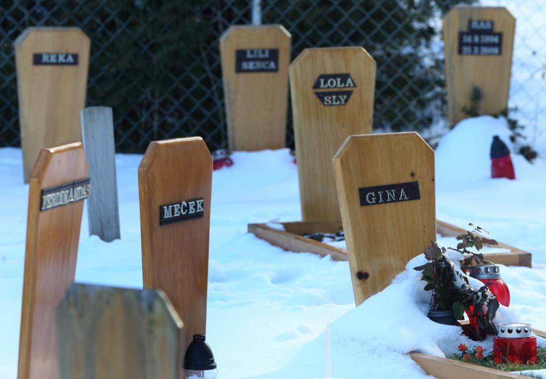 Prvo slovensko pokopališče za domače ljubljenčke pri nas je nastalo na območju vrtnarije Dobrava, tik ob mariborskem pokopališču Dobrava. FOTO: Tadej Regent/Delo
