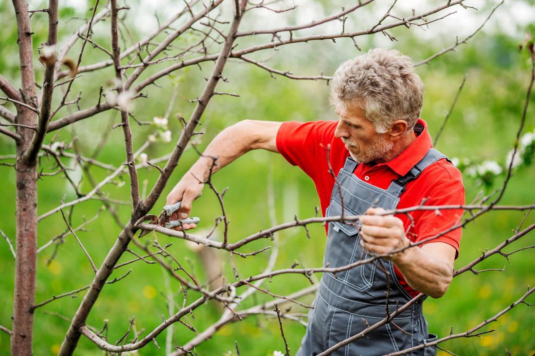 Sadno drevje obrezujemo, ko je napovedano suho vreme. Foto: PRESSLAB/Shutterstock