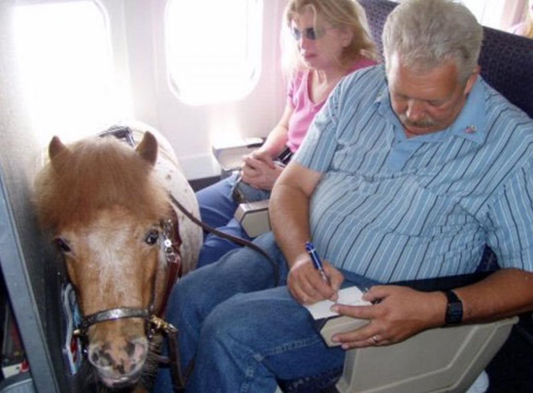 Miniaturni konj na letalu. (Foto: @etienneshrdlu/Twitter)