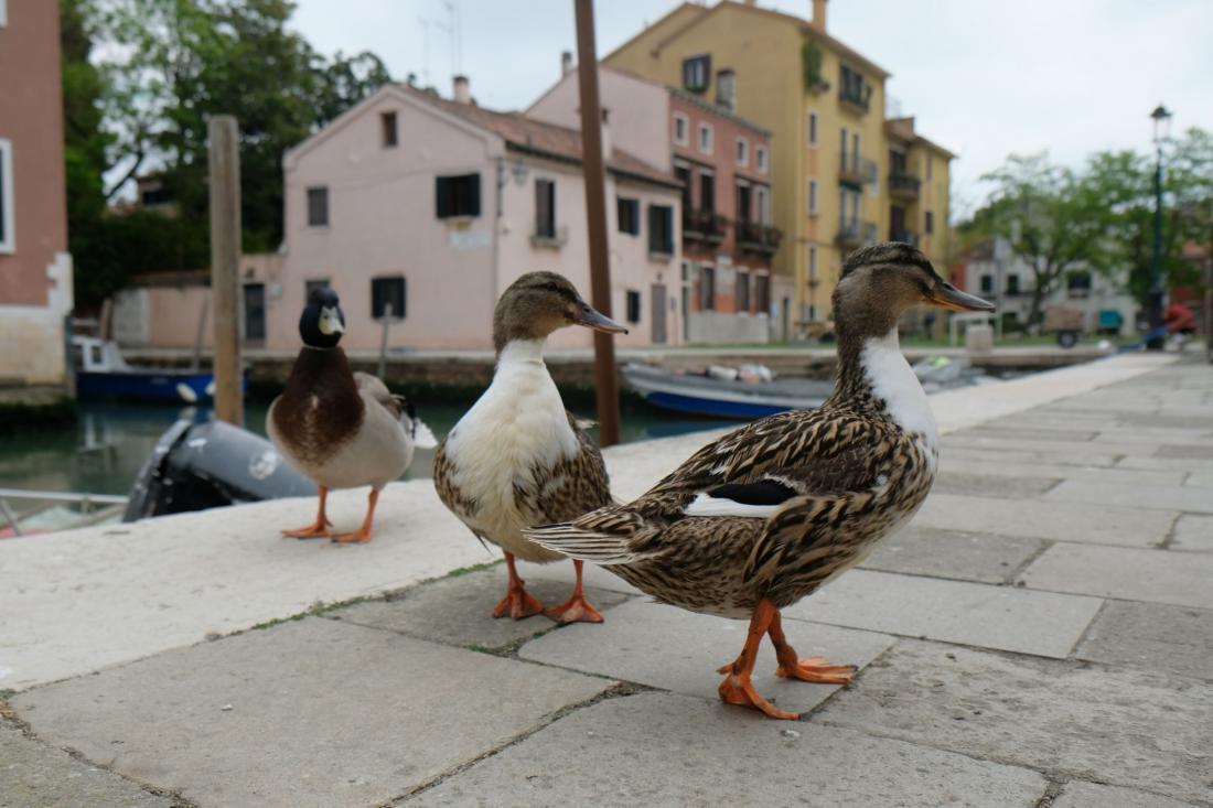 Race v Benetkah. Foto: Manuel Silvestri/Reuters