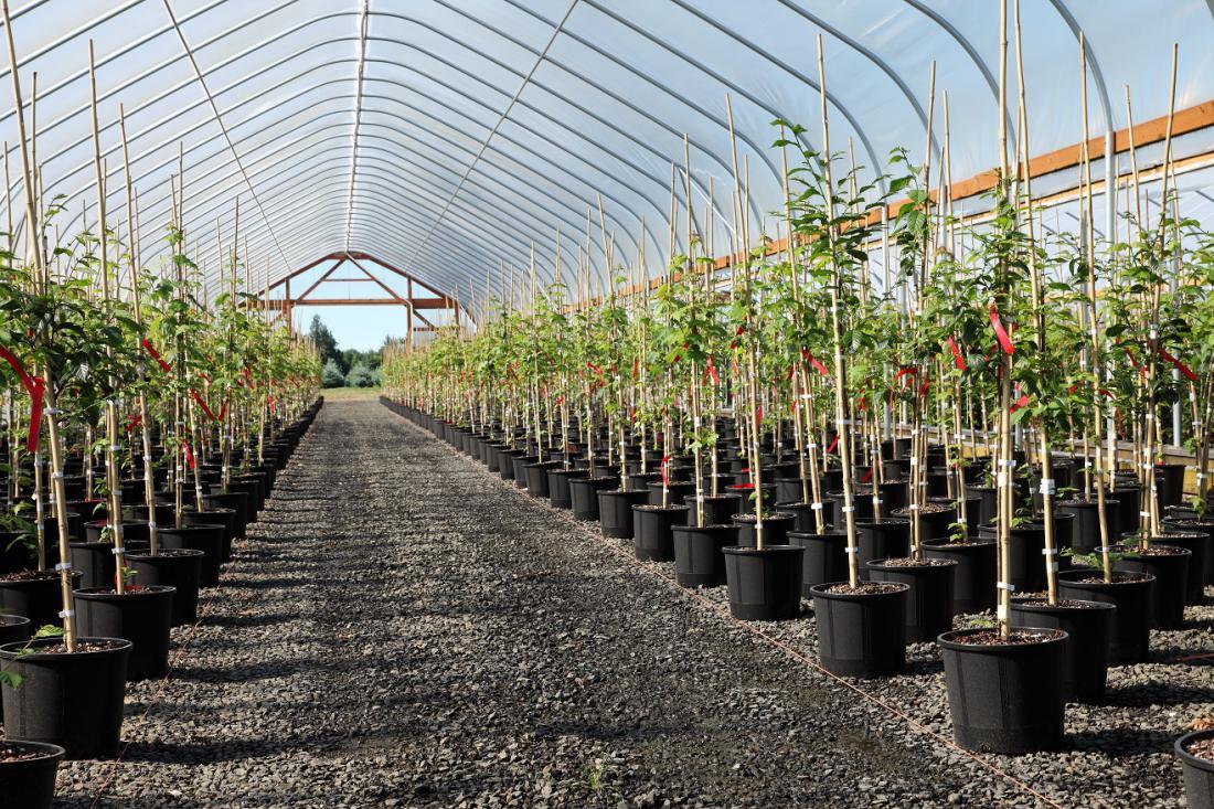 Prodaja ulončenih drevesnih sadik. Foto: Rigucci/Shutterstock