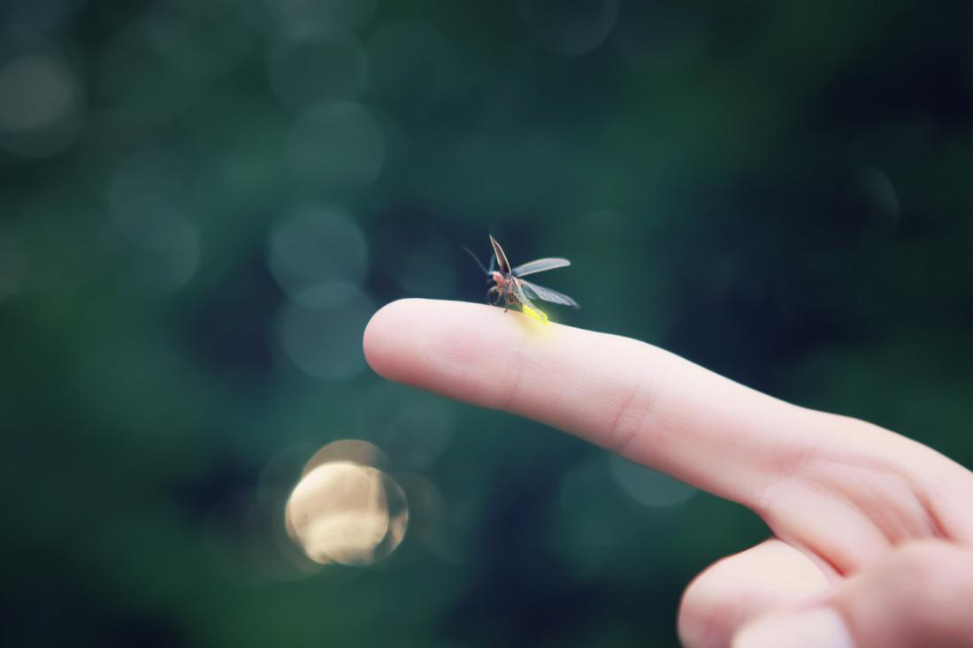 Samček kresnice. Foto: Suzanne Tucker/Shutterstock