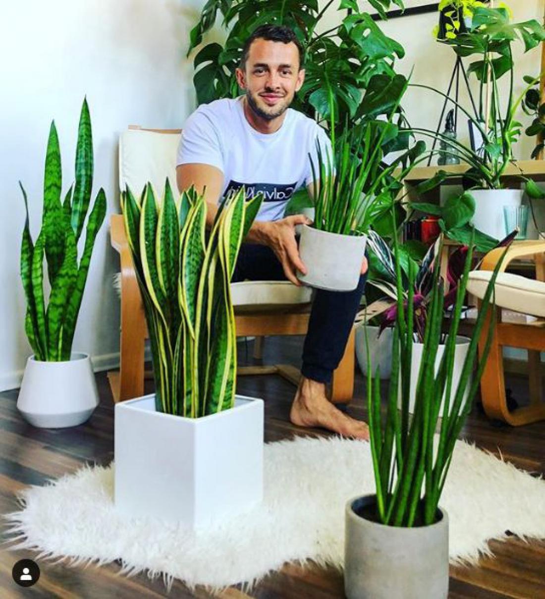 Tudi lonci so pomemben del vsake sobne rastline. Jan ima najraje klasične lonce, izbere pa belo, črno in odtenke zlate. (Foto: botanistbyheart/Instagram)