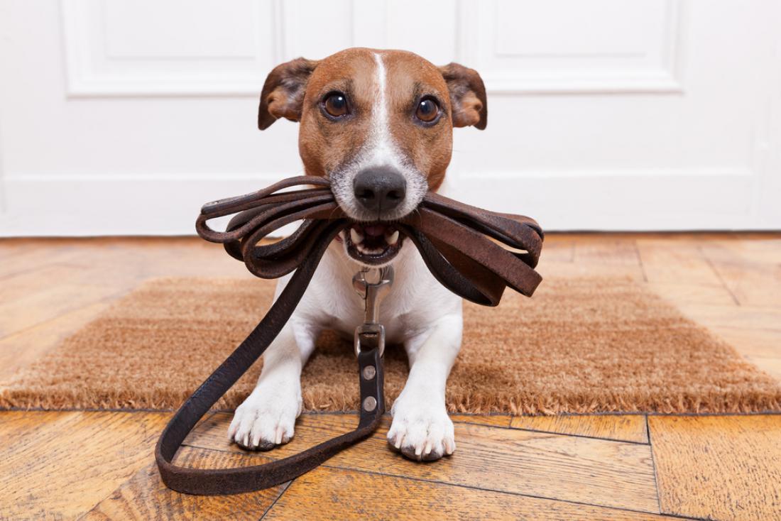 Za psa je običajno dovolj dolg sprehod, ki traja od 20 do 30 minut. FOTO: Shutterstock