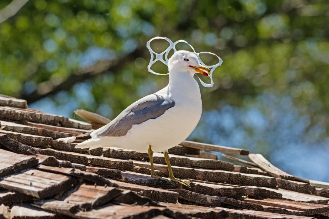Med 70 in 80 odstotkov odpadkov pride v morje s kopnega. FOTO: Shutterstock