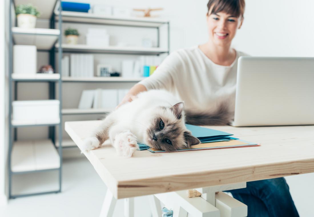 Mačke in psi na enak način vplivajo na počutje človeka. FOTO: Shutterstock