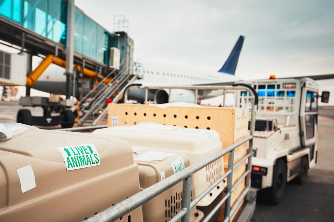 Živali se praviloma prevaža v posebnem prtljažnem prostoru na letalu.