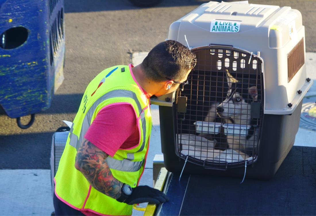 Za prevoz živali je treba doplačati in se ne vštevajo v okvir dovoljene brezplačne prtljage.