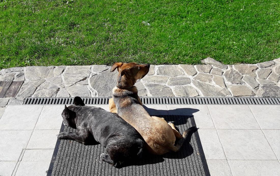 Vsi trije naši psi so iskali sonce, toploto in vitamin D.