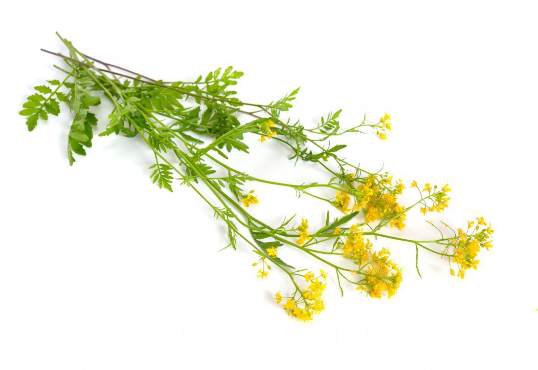 Divja potočarka je simpatična križnica, a iz njenih vodoravno razpredenih korenin kar sproti vznikajo nove rastline. Foto: spline_x/Shutterstock_