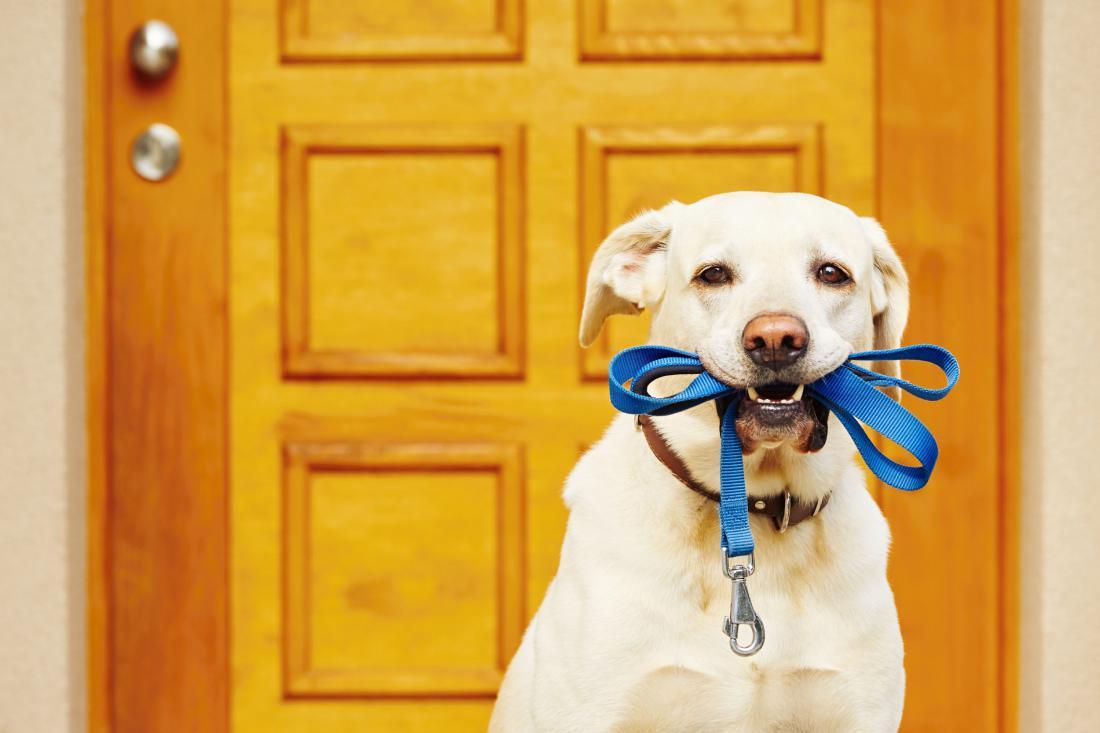 Na sprehod samo s povodcem! (Foto: Shutterstock)