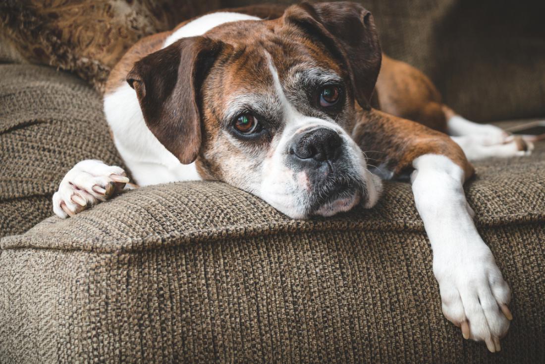 Osebnost psa se izoblikuje približno do šestega leta starosti. FOTO: Holly Michele/Shutterstock