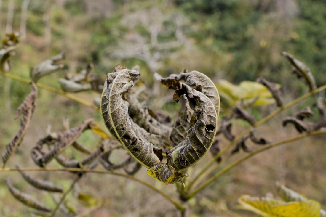 Rastline so se oglašale tudi ob pomanjkanju vode. FOTO: Shutterstock