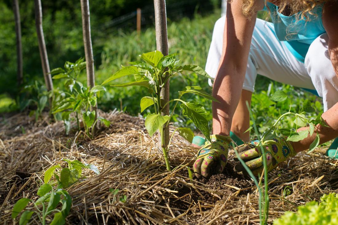 Zastrta tla ohranjajo vlago. Foto: KaliAntye/Shutterstock