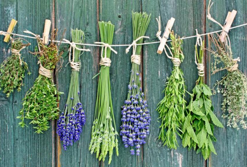 Zelišča na vrtu: Ustvarimo mešanico okusa in zdravja