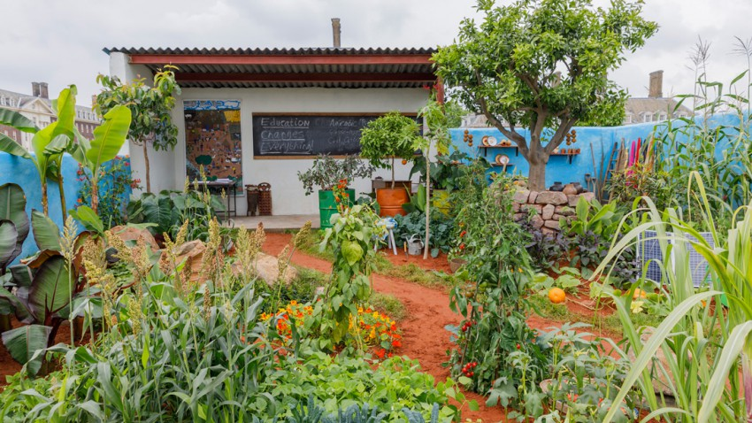 The CAMFED Garden: Giving Girls In Africa a Space to Grow